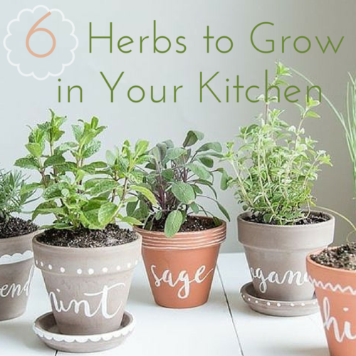 6 Herbs To Grow In Your Own Kitchen Garden Kimberly