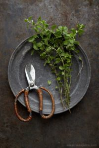 kitchen-herb-garden-oregano
