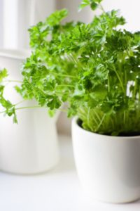 kitchen-herb-garden-parsley