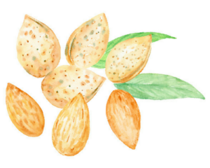watercolor-almonds-food-enhance-hair-growth